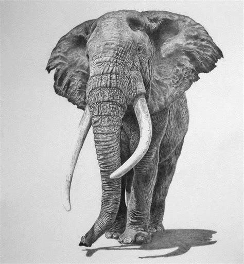 images  elephants drawings  pinterest