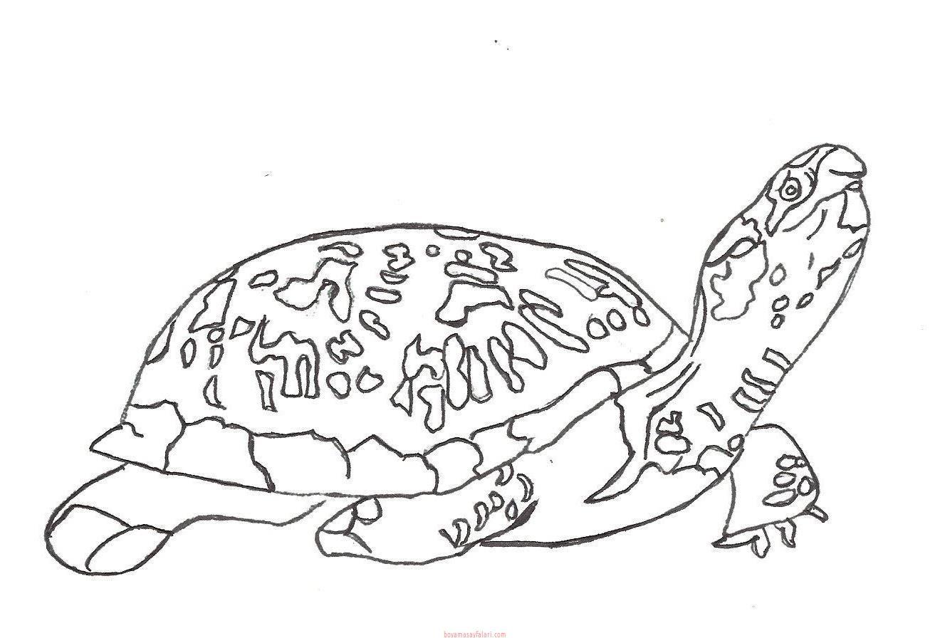Kaplumbağa Boyama Sayfaları 12 Sınıf öğretmenleri Için ücretsiz