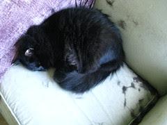 Huggy Bear's fur chair