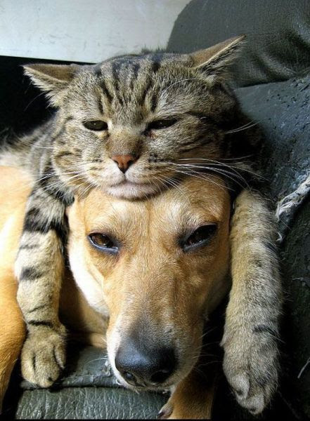 kamikazi.gr - Αστείες φωτογραφίες από τον κόσμο των ζώων (pics)