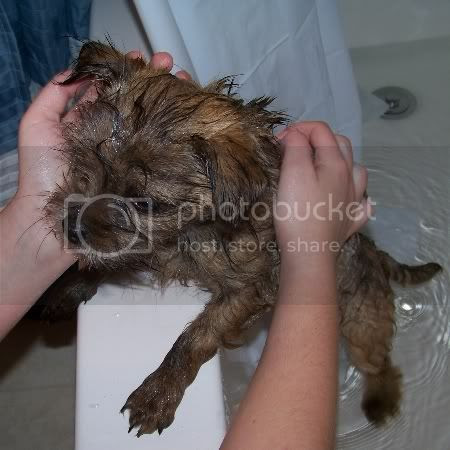 bathing & caring for new puppy