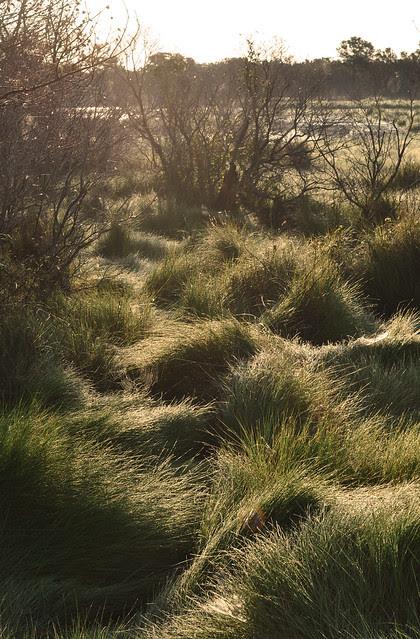 Morning Grass 2