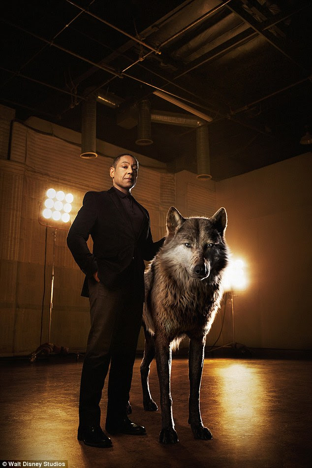 Regal: Giancarlo Esposito donned an all-black ensemble as he, too posed beside a beautiful wolf, his character, an 'alpha-male' named Akela 'who shoulders the responsibility of his pack'