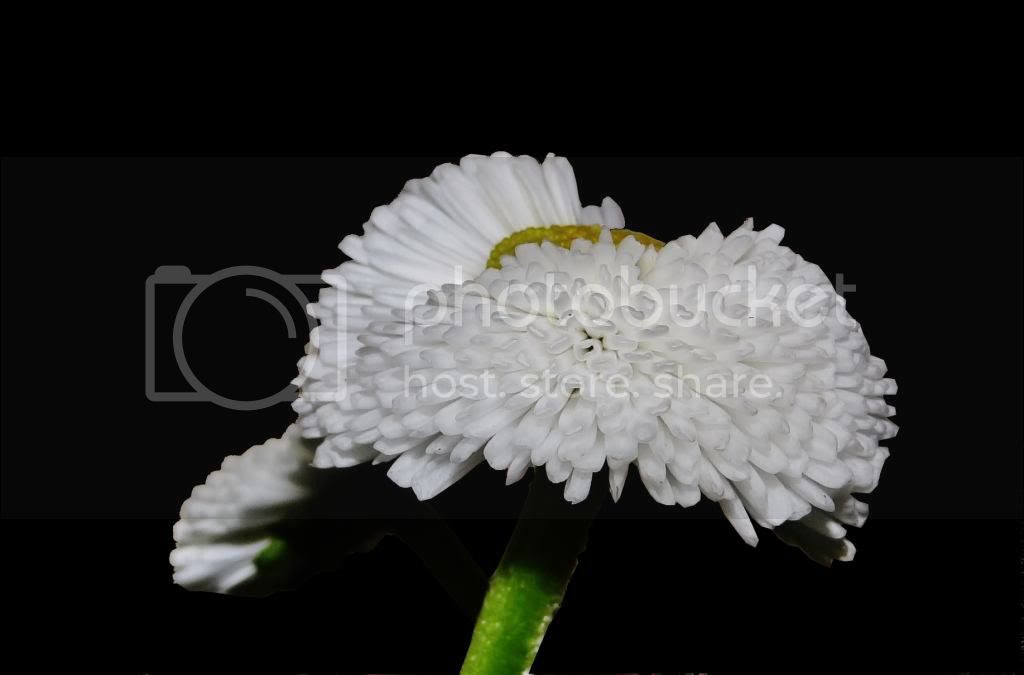 photo b3_zps454208a0.jpg