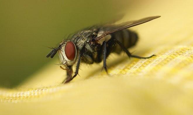 Почему обычную муху так сложно убить