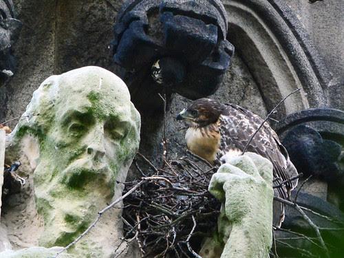 Remaining Nestling