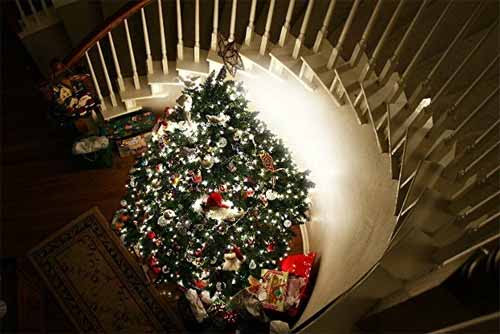 30 Pictures of Decorated Christmas Tree Designs