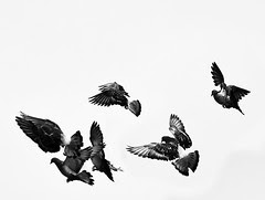 Birds in Black & White