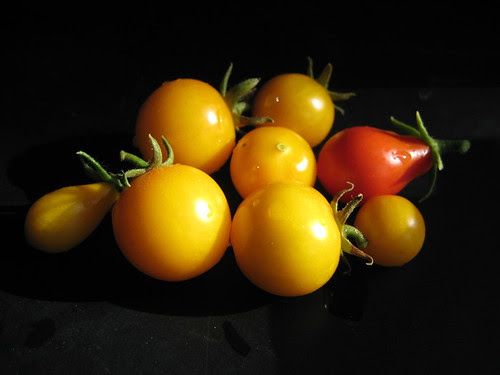 small tomato harvest