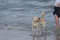 dog beach in jacksonville