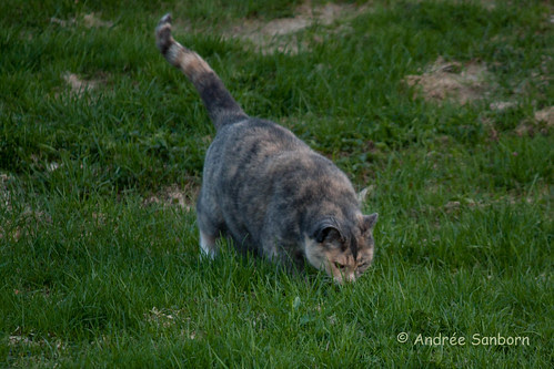 Possum Grazing-2.jpg