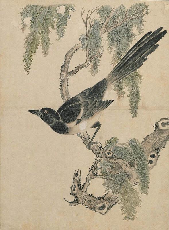 Ink + Watercolour  Bird sketch m