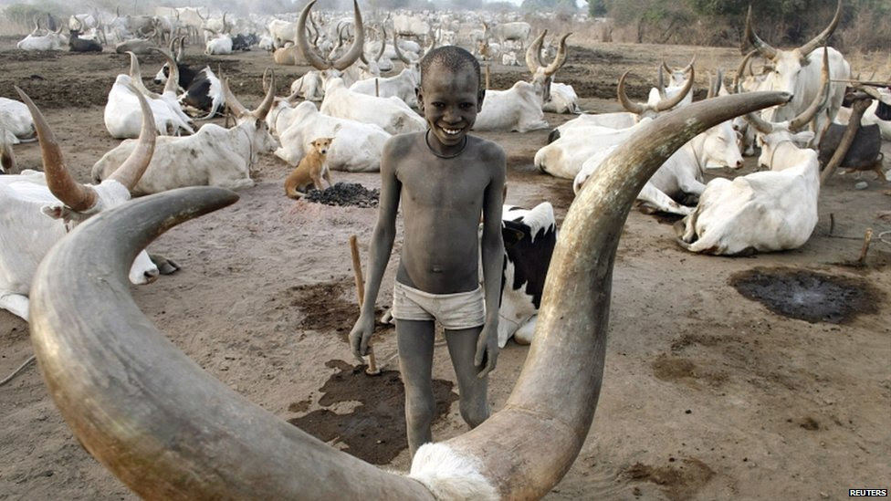 zebu cattle of india and pakistan relationship