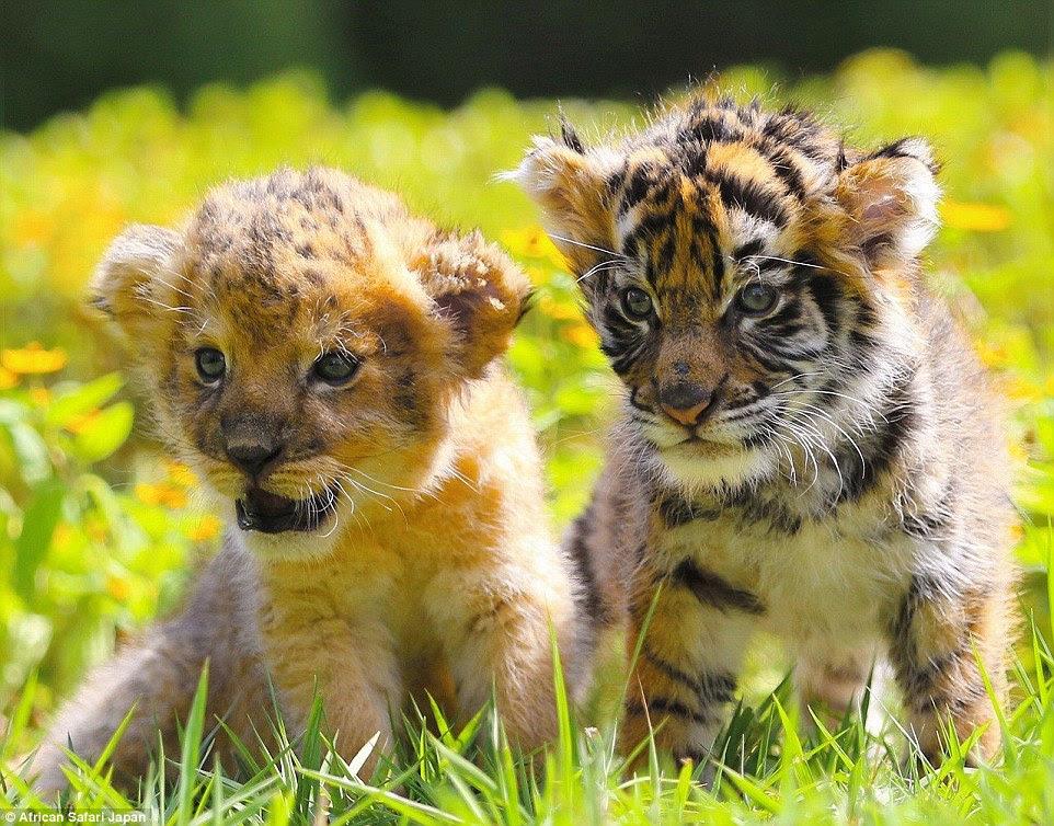 Os funcionários do zoológico foram compartilhando estas fotografias adoráveis ao longo das últimas semanas, fazendo com que milhares de pessoas coo sobre as imagens
