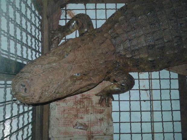 Policiais investigam como o animal foi parar na chácara  (Foto: Polícia Militar Ambiental / Divulgação)