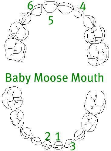 baby_teeth-blank