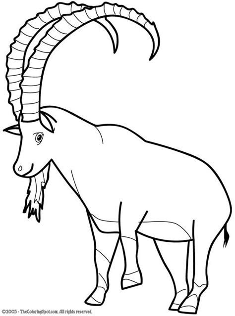 ibex coloring page audio stories  kids