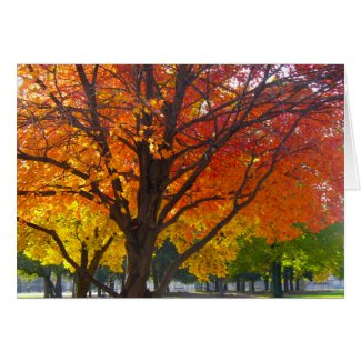 Autumn Leaves of Yellow and Orange Card