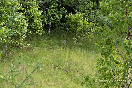 Possum Takes a Hike-4.jpg