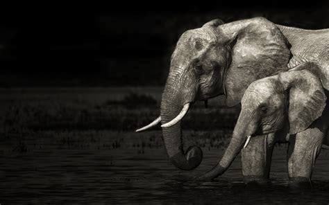 Elephant Full HD Wallpaper and Background   1920x1200   ID