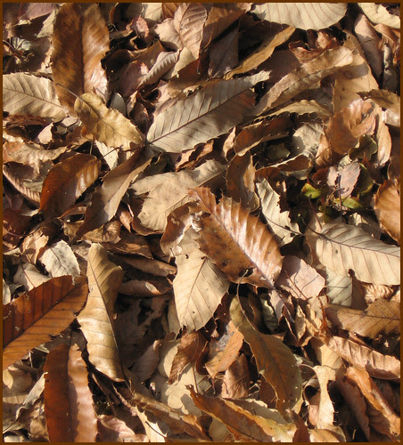 06 more leaves