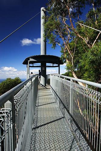 Illawarra Fly Tree Top Walk, Knights Hill, New South Wales, Australia IMG_4538_Illawarra_Fly