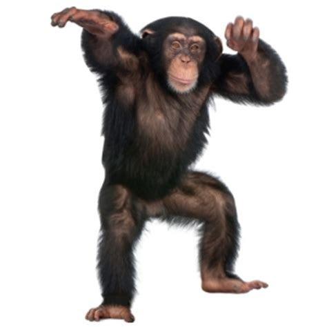 monos images   usseek.com
