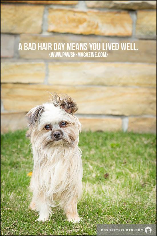 TORONTO DOG PHOTOGRAPHER: INSPIRING DOG QUOTES – Pawsh ...
