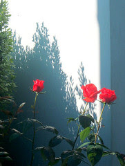 roses,14 juin 2005