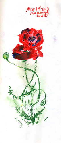 May 2013: Poppy Time