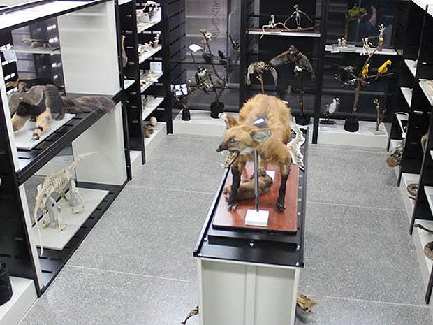 Animais empalhados são atrações de museu (Foto: Divulgação / UFOB)