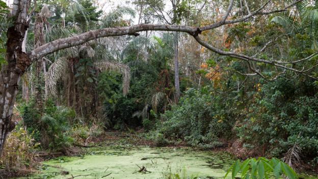 The dense forests of the Ivory Coast (Credit: André Quillien/Alamy)