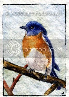 Curious Blue Bird ACEO