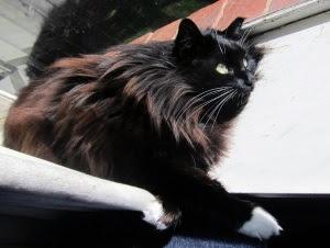 cat-sunbathe-2