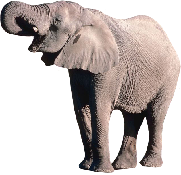 Download Kerala Elephant Png Hd Png Gif Base 852 transparent png illustrations and cipart matching kerala. download kerala elephant png hd png
