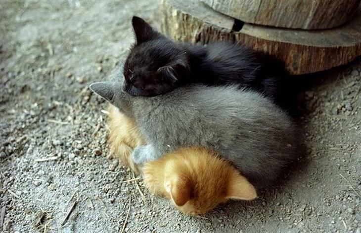 Animais fofos que usam os amigos de travesseiros