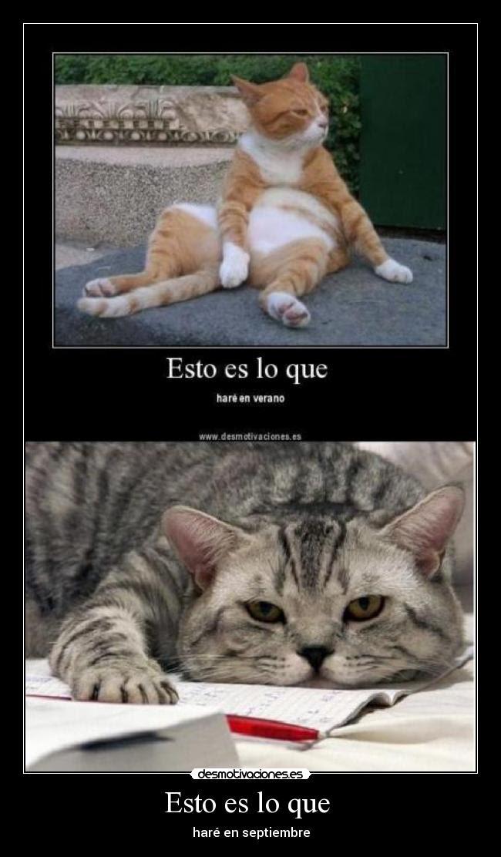 carteles gato verano septiembre vago recuperaciones curso instituto desmotivaciones