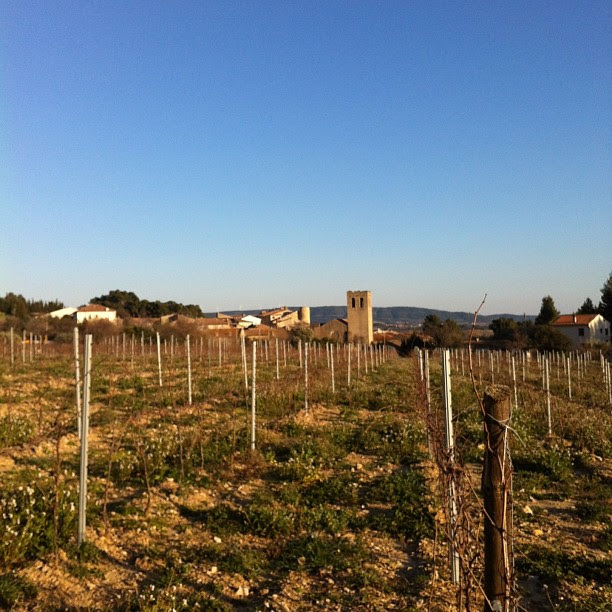 Beautiful blue skies, but freezing cold wind. Typical #Languedoc winter weather. Brrrr!!!!