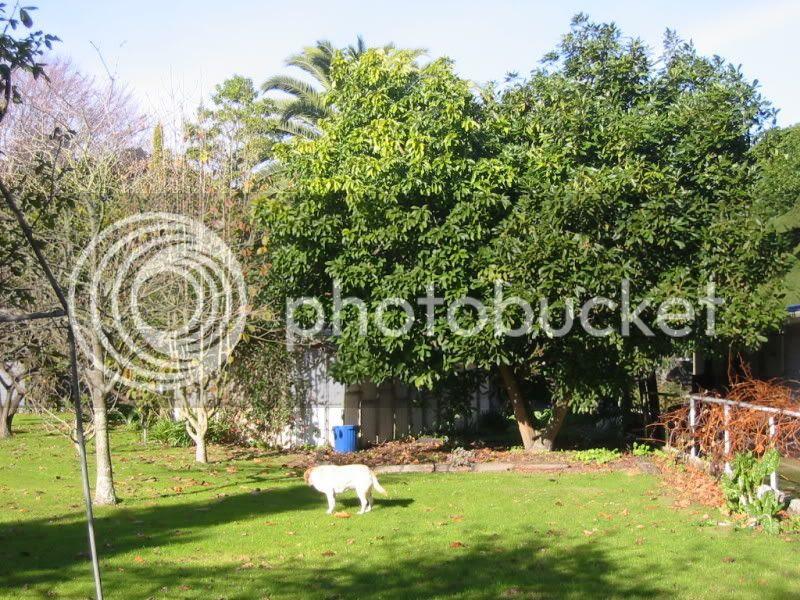 The Dog, the avocado tree & the tackroom