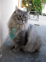 Oliver just back from the groomer looking dapper in his tie!