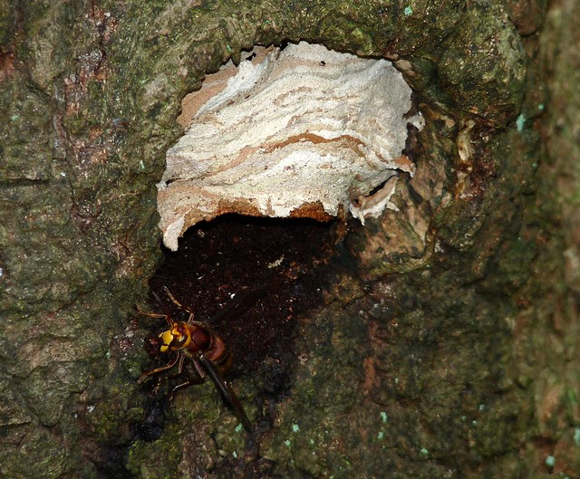 25031 - Hornet Nest, Gower