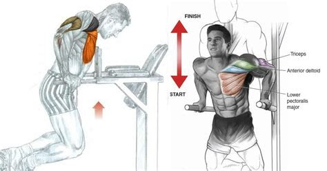 chest dips exercise bodydulding