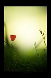 Esperanza Roja