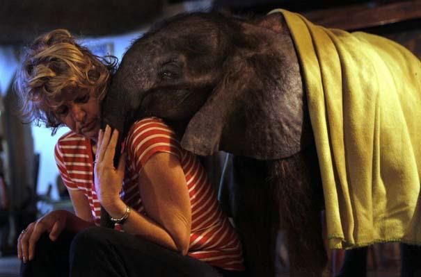 Οι 50 καλύτερες φωτογραφίες ζώων του 2012 (20)