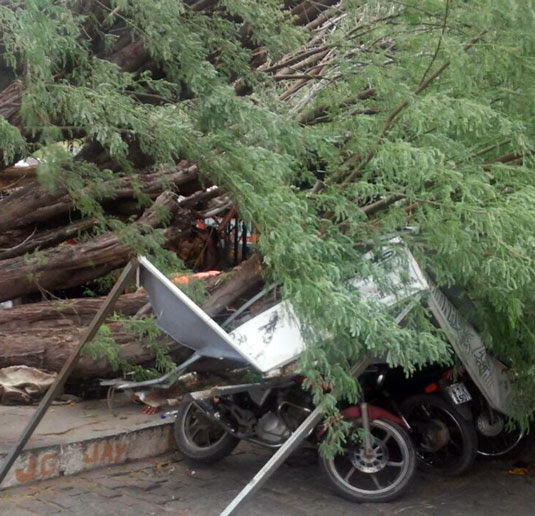 Árvore caiu sobre motos que estavam no estacionamento do Centro de Abastecimento de Queimadas | Foto: Leitor do Notícias de Santaluz