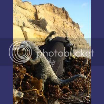 Lizards find Les Paul