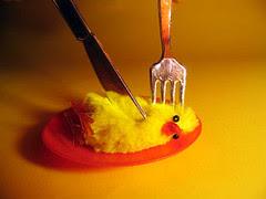 pollito chicken