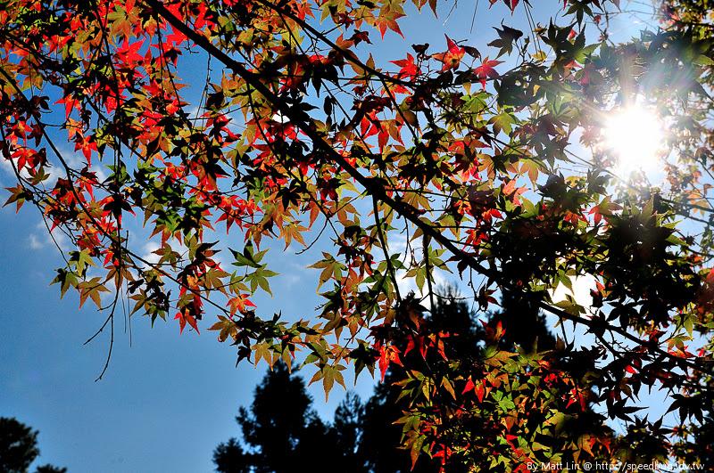 福壽山農場楓紅-39