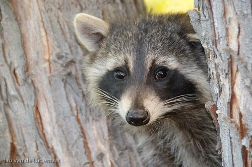 2009-10-17 Cute Squatter