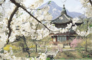 Gyeongbokgung Palace blossom, South Korea